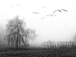 Mystieke mist van
