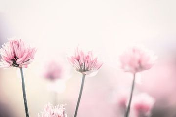 roze bloemetjes von Kristof Ven