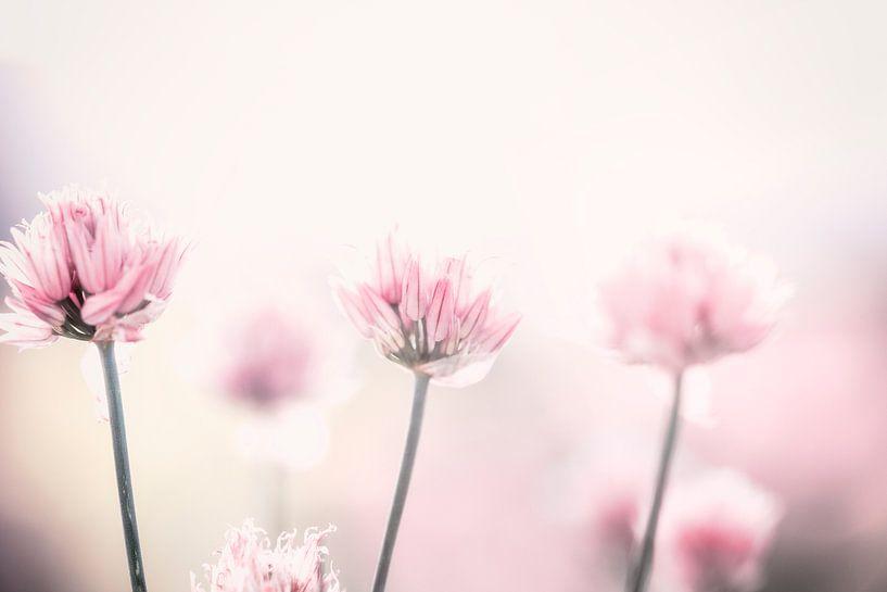 roze bloemetjes van Kristof Ven