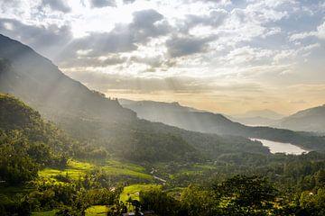 Teeplantages Sri Lanka im Sonnenstrahlen von Jille Zuidema