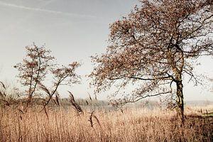 Natuurlandschap Amsterdam van