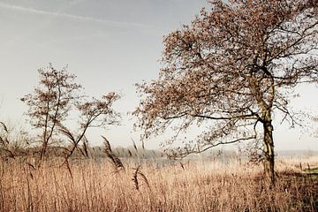Natuurlandschap Amsterdam van M.e. Amrani