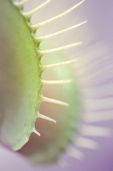 Dionaea's smile