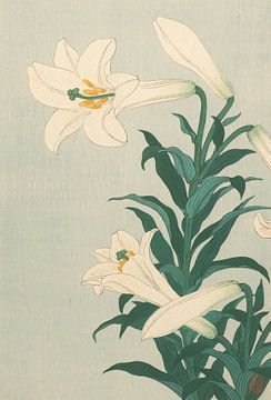 Lilien von Ohara Koson