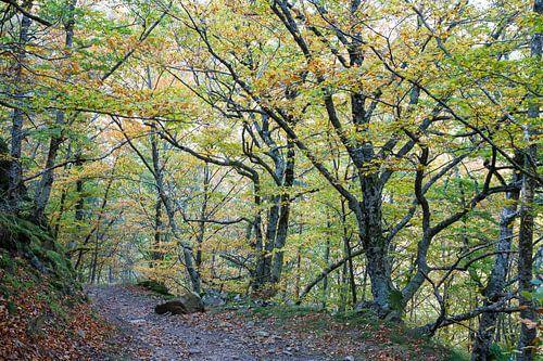 Kleuren van de herfst