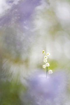Kleine Schönheiten von Bob Daalder