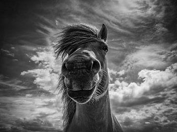 Ein Ohr, ein Auge und eine Nase von Ruud Peters