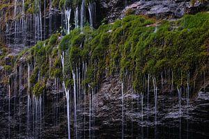 Groene oase van Rudy De Maeyer