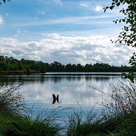 Nationalpark Fochteloërveen von Ingrid Aanen