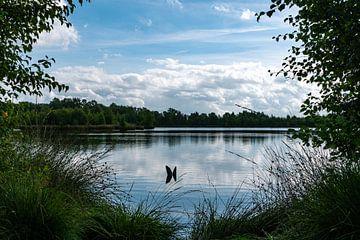 Nationalpark Fochteloërveen