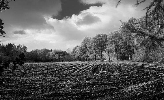 Corn fields in automn