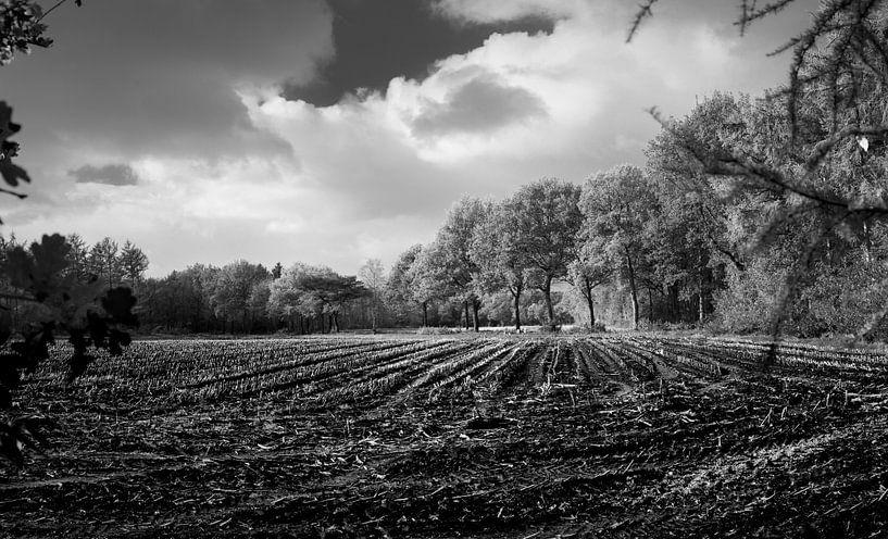 Corn fields in automn van Luis Fernando Valdés Villarreal Boullosa