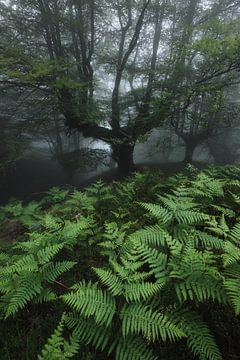Tree von Marvin Schweer