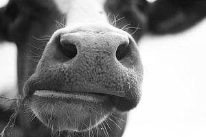 Typisch Nederlandse koe van Rob van Dam