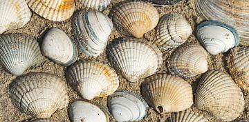 Strandreich von Kirsten Warner