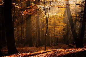 Herbstliche Lichtstimmung van