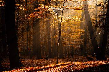 Herbstliche Lichtstimmung sur Kurt Krause
