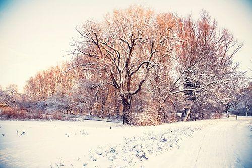 winter park ( Rijswijk)  van