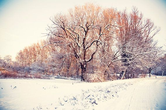 winter park ( Rijswijk)  van Ariadna de Raadt