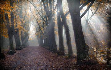 Groenendaalse bos van Karel Ton