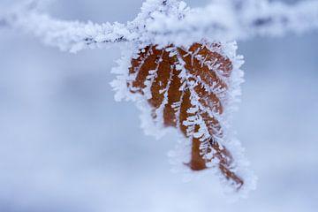 Makro Bild von Blatt im Winter mit Schnee bedeckt von Karijn | Fine art Natuur en Reis Fotografie