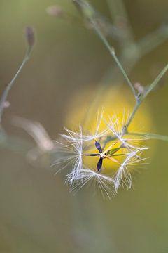 Design by nature (2653) von Tot Kijk fotografie: natuur aan de muur