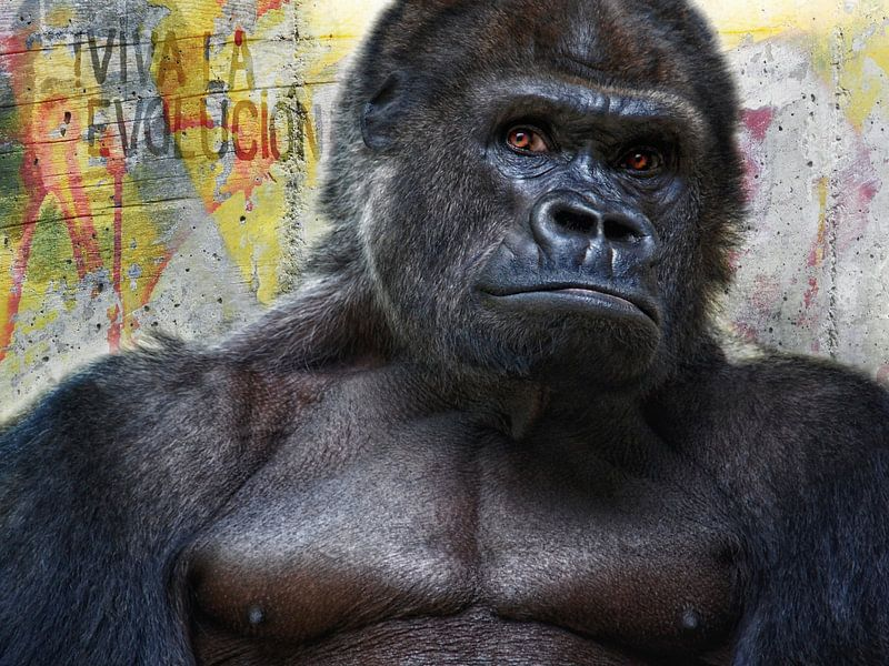 Viva la Evolucion! von Joachim G. Pinkawa