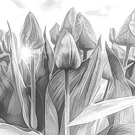 Tulpen von eric van der eijk