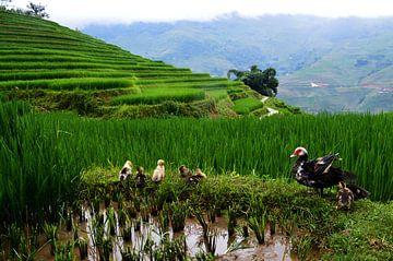 Familie op de Vietnamese rijstvelden van Zoe Vondenhoff