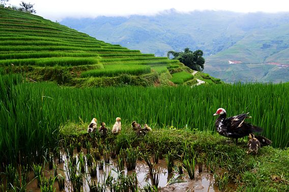 Familie op de Vietnamese rijstvelden