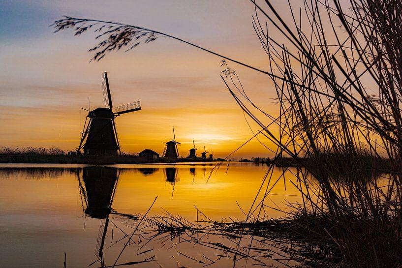 Een natuurlijke doorkijk naar de molens van Kinderdijk van Albert Lamme