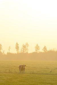 Kuh auf einer Wiese während eines nebligen Sonnenaufgangs