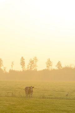 Kuh auf einer Wiese während eines nebligen Sonnenaufgangs von Sjoerd van der Wal