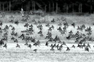 Spreeuwenvlucht van Marcha Bos Fotografie