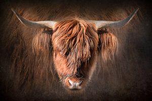 Porträt Schottischer Highlander von Danny den Breejen