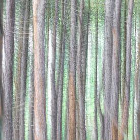 Dennenbomen van Jaap Spaans