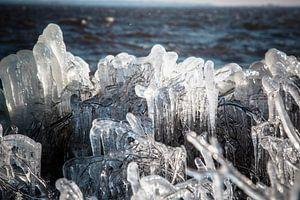 ijspegels aan het riet