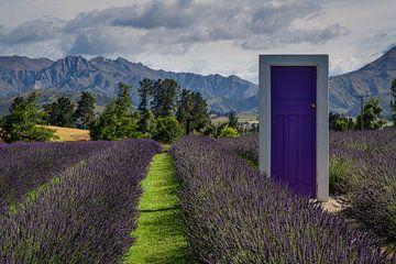 De paarse deur op de Lavender boerderij in Wanaka, Nieuw Zeeland van Anges van der Logt