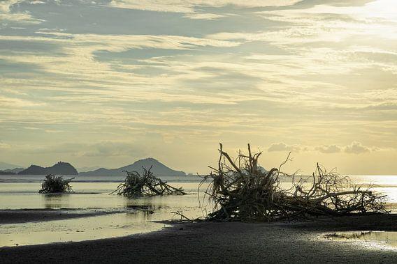Baumwurzeln am Strand