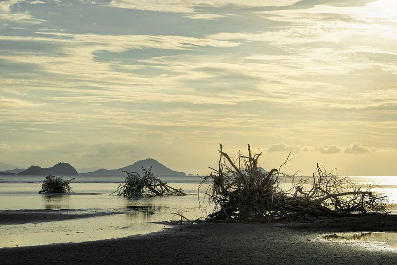 Baumwurzeln am Strand von Ralf Lehmann