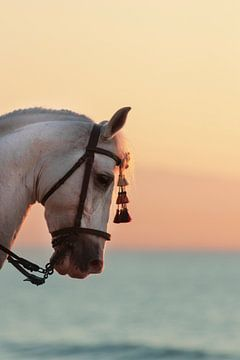 Show horse on the beach at sunset van Nannie van Berkel-Hijlkema