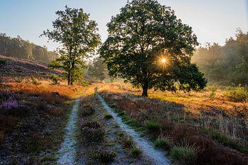 de ochtendzon op de Mechelse Heide van Guy Lambrechts