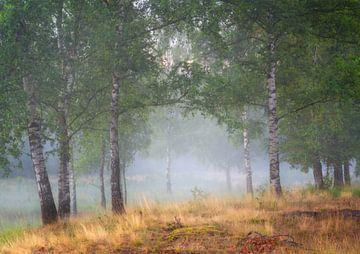 Bomen en mist op de Kortenhoeff nabij Huijbergen van Jos Pannekoek
