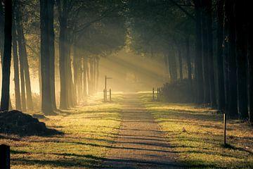 Zonnestralen von Dave De Klerk