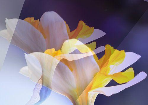 Narcisse van Rosi Lorz