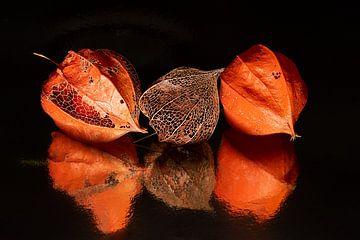 Stilleven :drie (zanderige) lampionnetjes met reflectie (herfst)