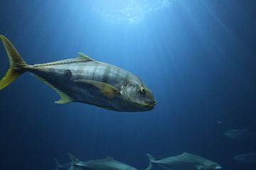 vis van Jop Fotografie