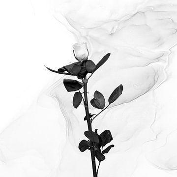 Weiße Rose | Liquid Art von Melanie Viola