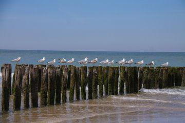 Rastende Möwen am Meeresrand und Sandstrand auf den Wellenbrechern sitzend von Marco Leeggangers