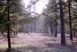 In Wald und Heide van